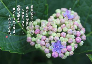 564_1000