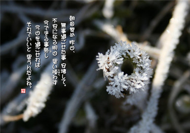 630_frost_flowers_1000
