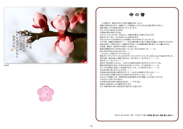 P09 命の蕾(梅花)