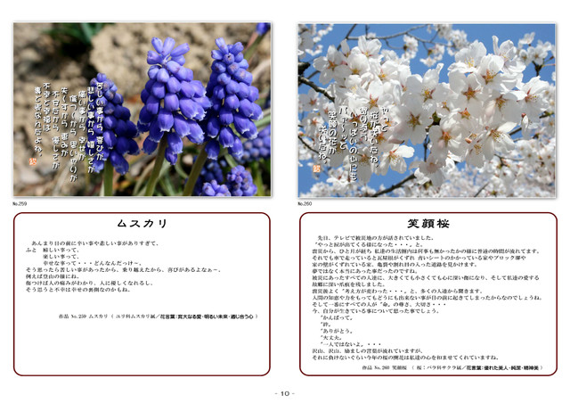 P10 ムスカリ・笑顔桜