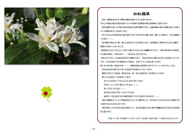 P14 白杜鵑草