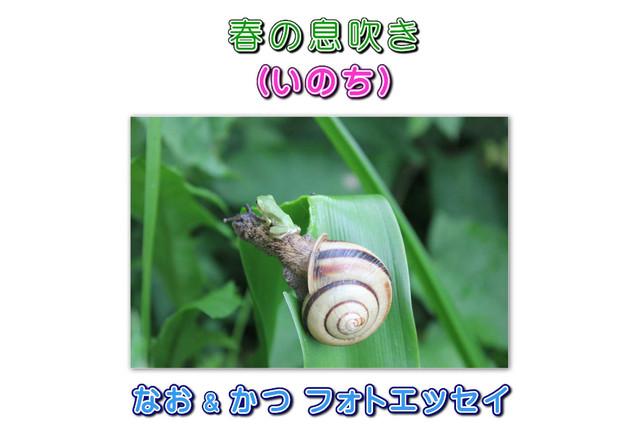 春の息吹き(いのち)