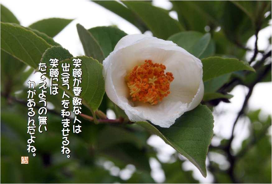 言葉 椿 花