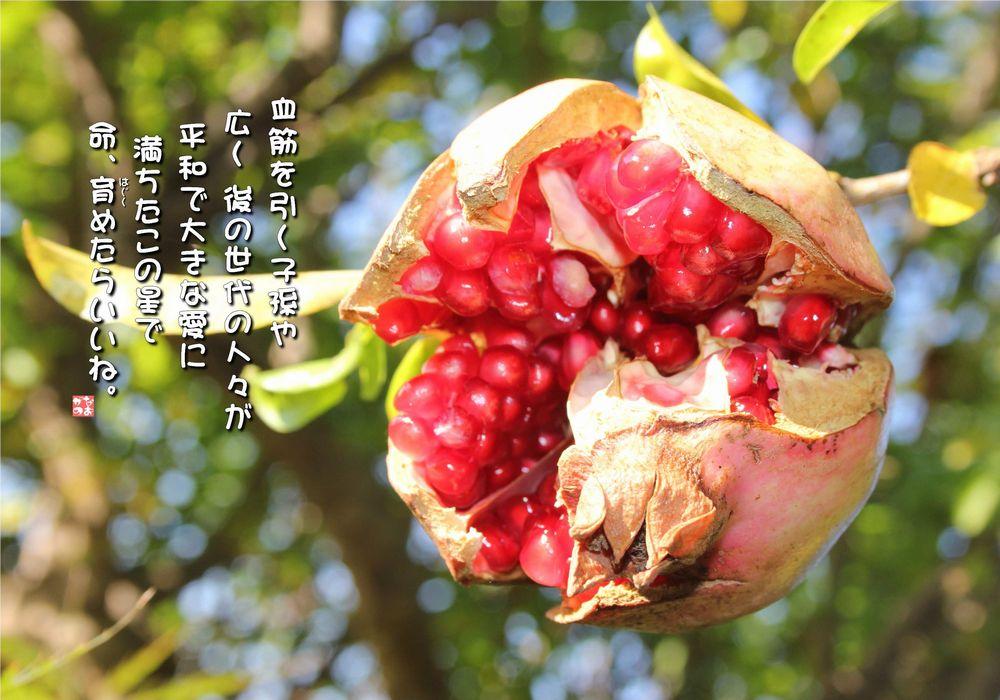 No.531 石榴の実 ( 花言葉:子孫の守護・優美・互いに思う