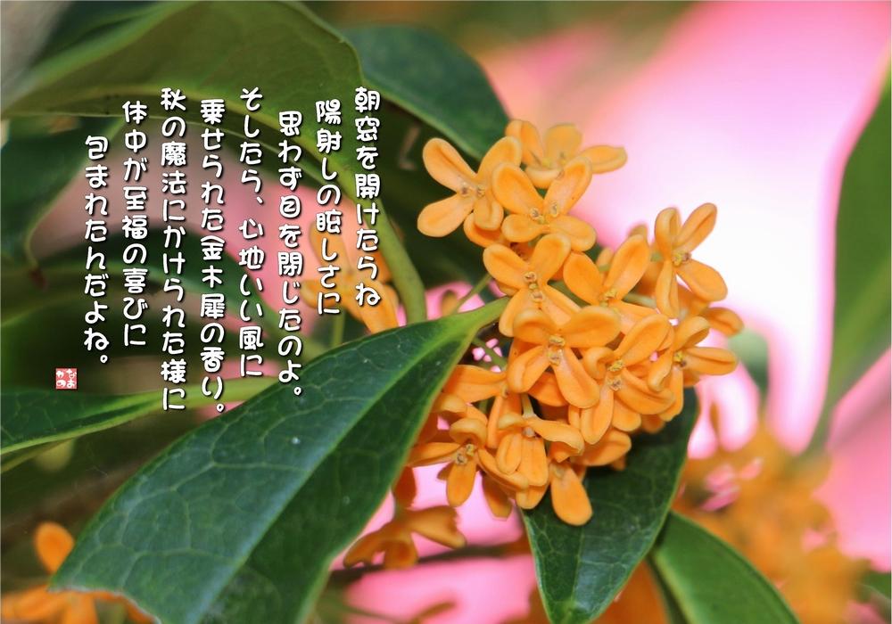 花 言葉 金木犀